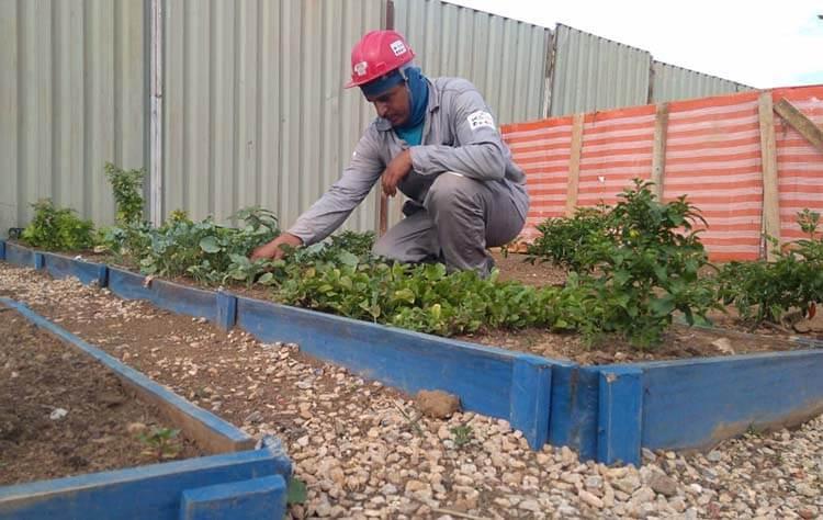 Tem verdura fresquinha na horta do canteiro de obras