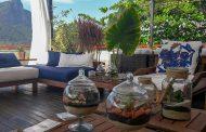 Plantas ajudam a refrescar o lar no verão