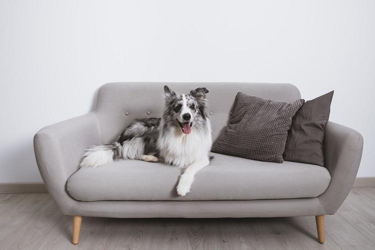 Pets em condomínios: dicas para uma convivência harmoniosa