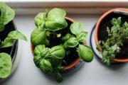 Como ter hortaliças fresquinhas sem sair de casa