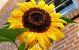 5 flores de fácil cultivo para ter em casa