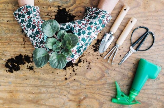 Procura por serviços de jardinagem cresce na pandemia