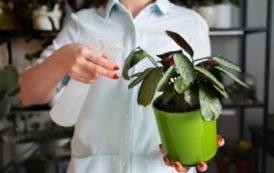 Saiba como cuidar das plantas corretamente